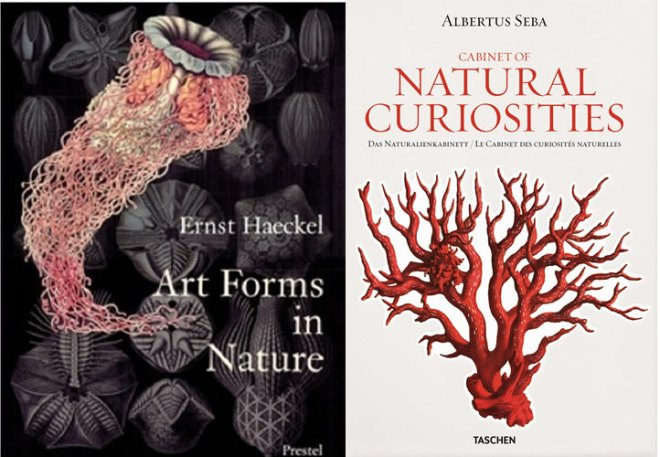 haeckel and seba
